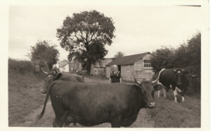 South Wonford 1957