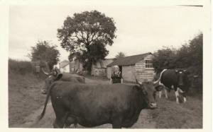 South Wonford 1957